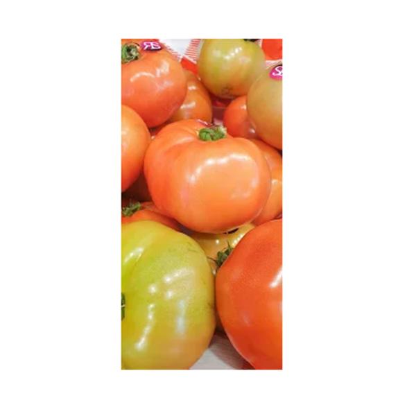 Venta de Tomate Ensalada Jack en Pantruque Gijón Asturias